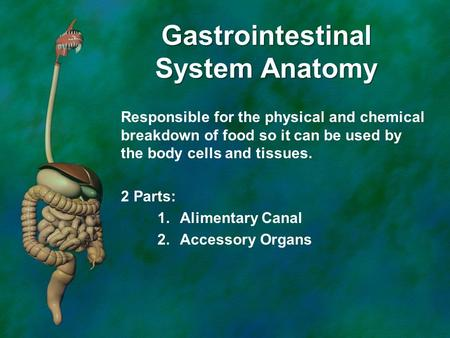 Gastrointestinal System Anatomy Responsible for the physical and chemical breakdown of food so it can be used by the body cells and tissues. 2 Parts: 1.Alimentary.