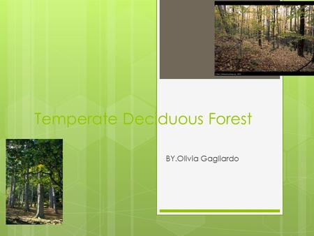 Temperate Deciduous Forest BY.Olivia Gagliardo. Deciduous Forest  Forest it 4 seasons winter an fall where tress boom in spring and lose their leaves.