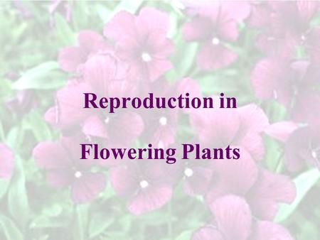 Reproduction in Flowering Plants. Parts of a Flower: B. filament – holds up the anthers contains pollen (sperm) A. anther – part of the flower that 1.
