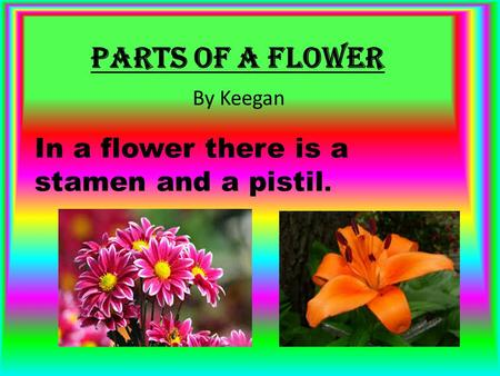 Parts Of a Flower In a flower there is a stamen and a pistil. By Keegan.