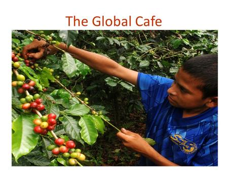 The Global Cafe. There are 2 main types of coffee beans grown globally, Arabica and Robusta In the twelve months ending July 2012, exports of Arabica.