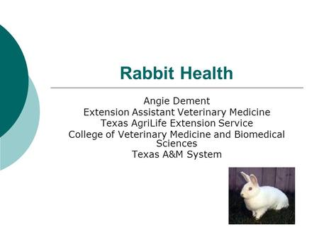 Rabbit Health Angie Dement Extension Assistant Veterinary Medicine Texas AgriLife Extension Service College of Veterinary Medicine and Biomedical Sciences.