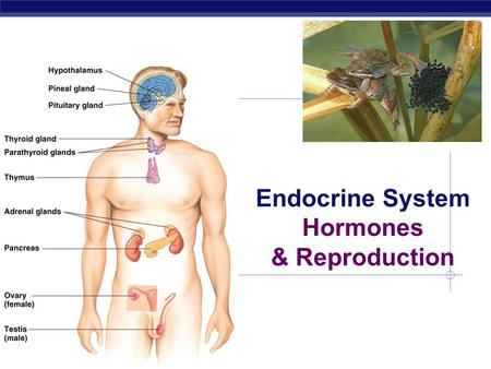 AP Biology Endocrine System Hormones & Reproduction.