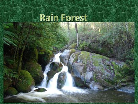 The rain forest is made up of four floors. The four floors are the forest floor,understory,canopy, and the emergent layer. Rain forests are very dense,