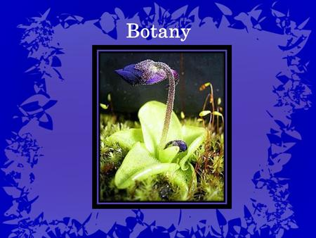 Botany. A branch of biology that involves the study of plant life The term botany comes from a Greek word that means: pasture, grass or fodder Botany.