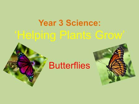 Year 3 Science: 'Helping Plants Grow' Butterflies.