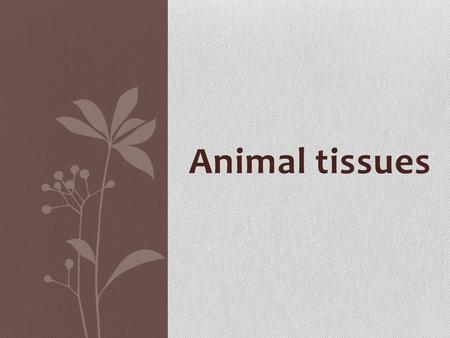 Animal tissues. Histology: is the science that study animal tissues.