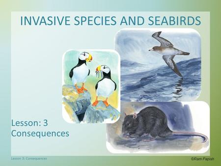 INVASIVE SPECIES AND SEABIRDS Lesson: 3 Consequences ©Ram Papish Lesson 3: Consequences.