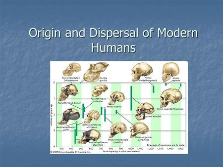 Origin and Dispersal of Modern Humans. Homo sapiens Approximately 200 kya the first Homo sapiens evolved in Africa Approximately 200 kya the first Homo.
