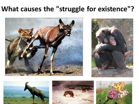 What causes the struggle for existence? Which animal has INCREASED fitness? Living in a dry, wooded area in the fall season….. Living in north Canada…in.