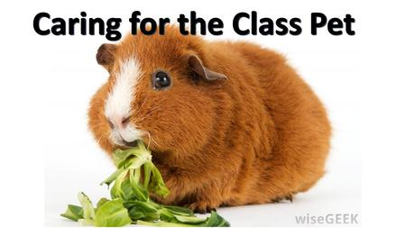 Class Pet! Caring for a pet!. Vocabulary: Cage Cage: a box made of wire or metal bars in which animals are housed.