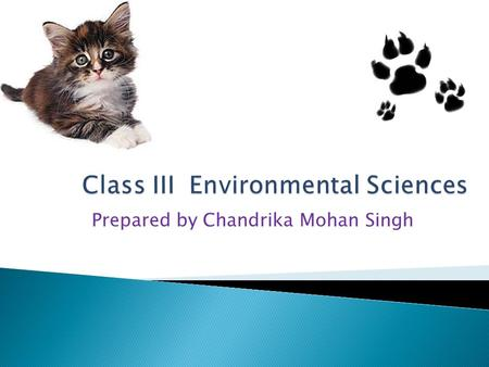 Prepared by Chandrika Mohan Singh Our Friends Animals.