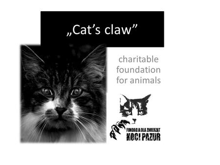 """Cat's claw"" charitable foundation for animals. something about something about more than 600 Volunteers have cats and other animals in our homes. Until."