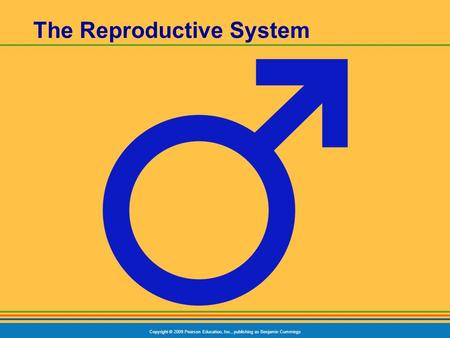 Copyright © 2009 Pearson Education, Inc., publishing as Benjamin Cummings The Reproductive System.