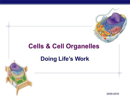 AP Biology 2009-2010 Cells & Cell Organelles Doing Life's Work.