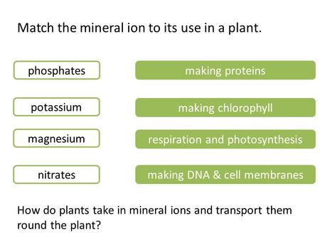 Match the mineral ion to its use in a plant.