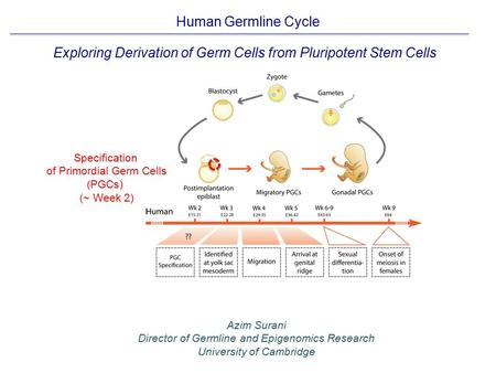 Exploring Derivation of Germ Cells from Pluripotent Stem Cells