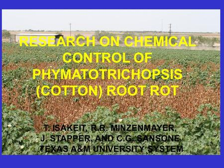 RESEARCH ON CHEMICAL CONTROL OF PHYMATOTRICHOPSIS (COTTON) ROOT ROT T. ISAKEIT, R.R. MINZENMAYER, J. STAPPER, AND C.G. SANSONE TEXAS A&M UNIVERSITY SYSTEM.