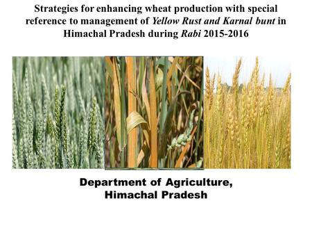Strategies for enhancing wheat production with special reference to management of Yellow Rust and Karnal bunt in Himachal Pradesh during Rabi 2015-2016.