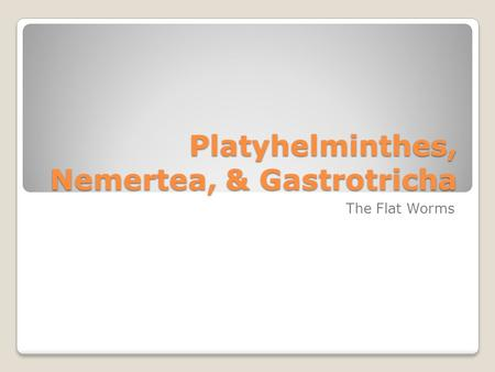 Platyhelminthes, Nemertea, & Gastrotricha The Flat Worms.