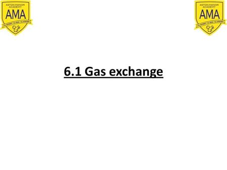 6.1 Gas exchange. Learning objectives To DESCRIBE the relationship between the size of an organism or structure and its surface area to volume ratio To.