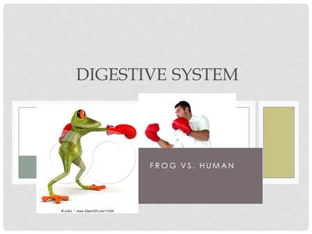 FROG VS. HUMAN DIGESTIVE SYSTEM. MECHANICAL DIGESTION Breaking down of food into smaller pieces Mouth –chewing Stomach - churning.