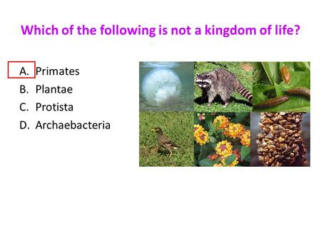 Which of the following is not a kingdom of life? A.Primates B.Plantae C.Protista D.Archaebacteria.