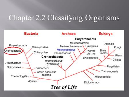 Chapter 2.2 Classifying Organisms. POINT > Define prokaryote and eukaryote POINT > Explain why and how we classify things POINT > Define taxonomy and.