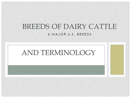 6 MAJOR U.S. BREEDS ORIGINAL BY NICKI SCHAEFER BREEDS OF DAIRY CATTLE AND TERMINOLOGY.