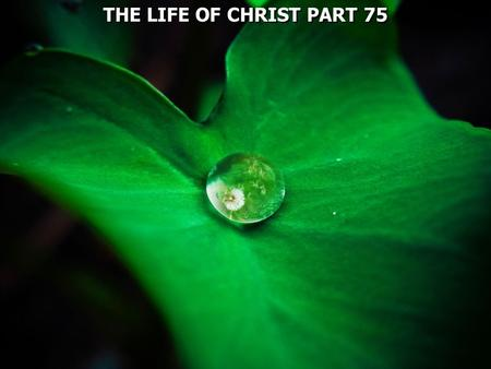 THE LIFE OF CHRIST PART 75. Mark 11:20 Now in the morning, as they passed by, they saw the fig tree dried up from the roots. 21 And Peter, remembering,
