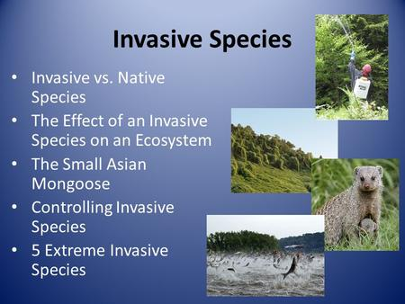 Invasive Species Invasive vs. Native Species
