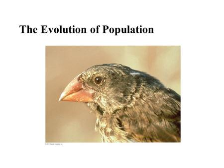 The Evolution of Population. Figure 23.2 1976 (similar to the prior 3 years) 1978 (after drought) Average beak depth (mm) 10 9 8 0 Natural selection acts.