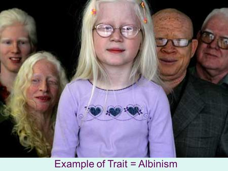 Pedigree Charts Show relationships within a family In genetics: Used to show how an inherited trait is passed through a family Example of Trait = Albinism.