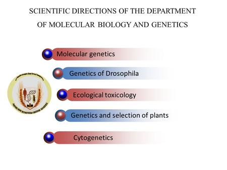 SCIENTIFIC DIRECTIONS OF THE DEPARTMENT OF MOLECULAR BIOLOGY AND GENETICS Genetics of Drosophila Ecological toxicology Genetics and selection of plants.