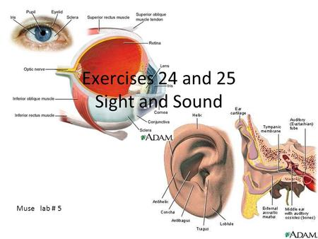 Exercises 24 and 25 Sight and Sound Muse lab # 5.