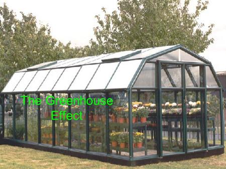The Greenhouse Effect. A greenhouse is a building used to grow plants when the outside temperature is too low. The roof of the greenhouse prevents convection.