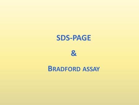 SDS-PAGE & Bradford assay