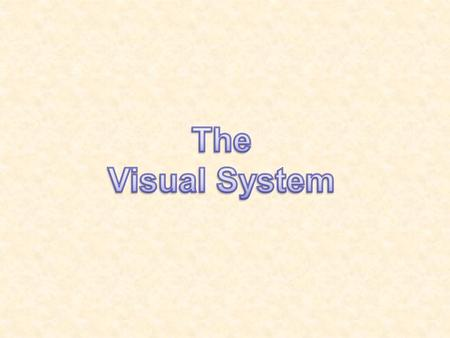 The Visual System.