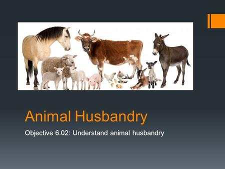 Animal Husbandry Objective 6.02: Understand animal husbandry.