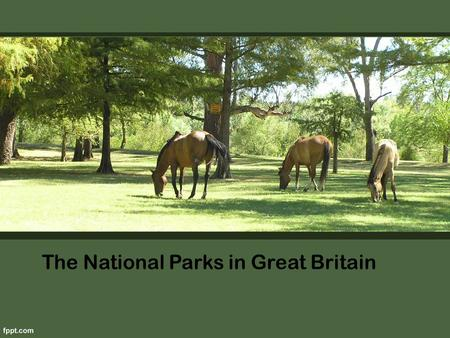 The National Parks in Great Britain. After a noisy city, so nice to be outdoors. Wander through the quiet forest paths, listening to the birds, breathe.
