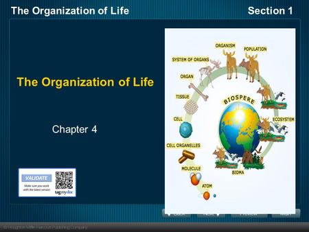 The Organization of LifeSection 1 The Organization of Life Chapter 4.