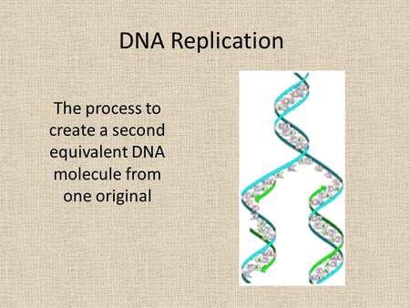 DNA Replication The process to create a second equivalent DNA molecule from one original.