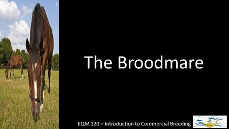 The Broodmare EQM 120 – Introduction to Commercial Breeding.