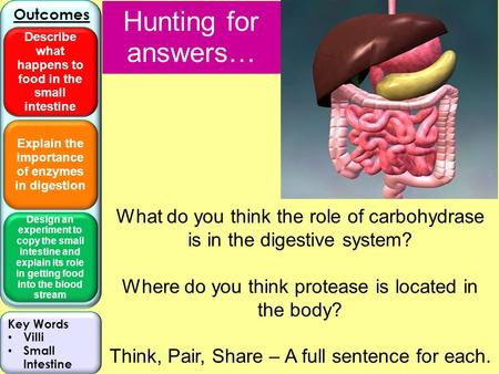 Explain the importance of enzymes in digestion Design an experiment to copy the small intestine and explain its role in getting food into the blood stream.