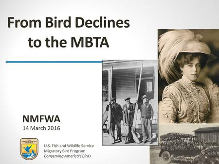 U.S. Fish and Wildlife Service Migratory Bird Program Conserving America's Birds From Bird Declines to the MBTA 14 March 2016 NMFWA.
