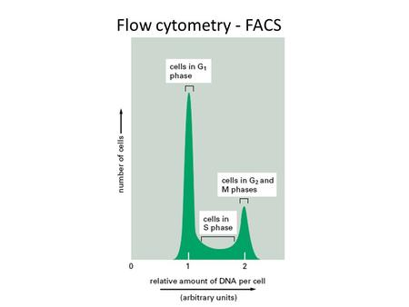 Flow cytometry - FACS. Cell Cycle (reminder) Life is made of cells Cells come from cells Life/Cells reproduce.