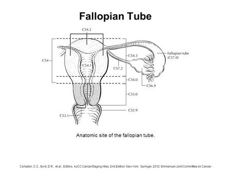 Fallopian Tube Anatomic site of the fallopian tube. Compton, C.C., Byrd, D.R., et al., Editors. AJCC CancerStaging Atlas, 2nd Edition. New York: Springer,