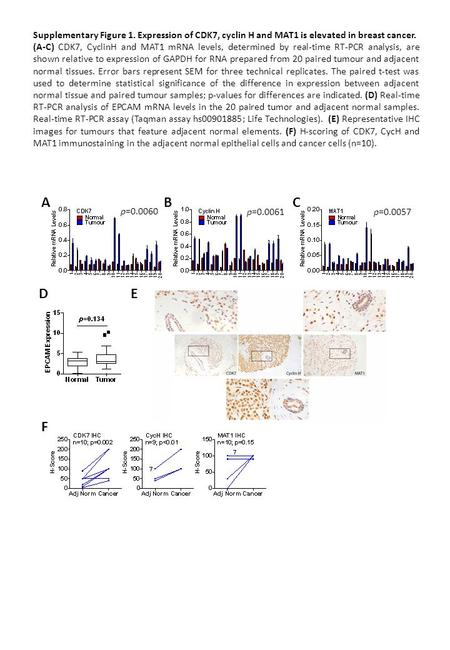 Supplementary Figure 1. Expression of CDK7, cyclin H and MAT1 is elevated in breast cancer. (A-C) CDK7, CyclinH and MAT1 mRNA levels, determined by real-time.