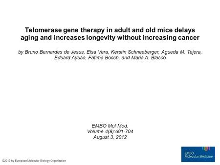 Telomerase gene therapy in adult and old mice delays aging and increases longevity without increasing cancer by Bruno Bernardes de Jesus, Elsa Vera, Kerstin.
