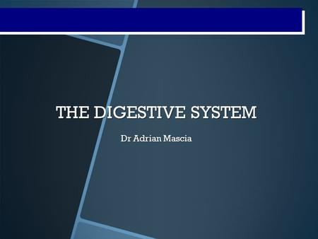 Digestive System Processes THE DIGESTIVE SYSTEM Dr Adrian Mascia.